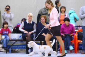 Mirinda wins BIS puppy !