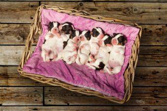 Puppies were born !